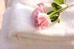 taoru-rose