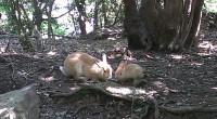 6月にツバメの巣立ちにも遭遇し、今年は出会いが多い気がしてます。 5月に大久野島に行きました。 沢山の人たちが餌を持って来ていたので、 ウサギはあまりよって来てはくれませんでしたが、 母ウサギと子ウサギが一緒にいるところに出会えました。