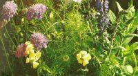 家族治療院の寄せ植えは、6月と12月に花を入れ替えるようにしています。 いつもKIT*花工房さんでレイアウトの相談をしてお花を決め、 土や防虫剤も分けてもらっています。 個性のあるもの、丈夫で沢山の花を次々に咲かせるものなど、 水やりだけでメンテナンスが楽なものを教えてもらっていました。 素敵な寄せ植え画像が載っているキット*花工房さんのブログは、 以下をク ...