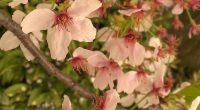 先週の金曜日に小学校の桜が満開で、子どもや家族、友達と 「入学式に桜が咲いているなんて、超ラッキーだね~!!」と話していました。 2,3日前に満開だった福山城公園の桜は散りかけているようですが、 木によってはまだまだ満開のもあると思います。 広島県の中北部、世羅では7分咲きぐらいのところもあるようです。 以下は、桜の情報を公開しているサイトです。 https ...