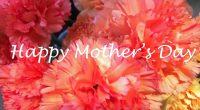 5/14(日)は、母の日ですね!! プレゼントはもう用意しましたか?? わたしは、母にお花とお菓子をあげることが多いのです。 お花はアレンジを工夫していただけるところでお願いしたいので、 プリザーブドフラワーや造花なら「ドラ吉の花工房」さん 生花なら「花工房 花の箱」さん 寄せ植えなら「KIT*花工房」さん どのお店もアレンジメントを教えていらっしゃるので、 ...