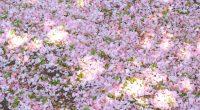 ここ2、3日で、ほぼ花は散り、葉っぱが青々と茂っていますが、 桜の木の下に花びらの絨毯ができているのも美しいですし、 光が当たって葉っぱが輝いて見える様子も美しいですよね。 昨日は、花びら絨毯の地面からひょろりとぺんぺん草が伸びているのを見て、 思わず座り込み、「可愛いいねぇ~!!」と子どもの頭のように触ってました。 桜は、花が咲いているとき、散っているとき ...