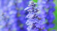 すこし薄めの紫色で、小花がたくさんついているシソ科の植物をいただきました。 とても元気な様子で食卓に飾っても爽やかです。 上記、写真のジュウニヒトエは日本固有種、耐寒性もある多年草ということなので、 簡単に育てられるのかもと期待しています。 水に差して根が出てきたら、鉢植えにしてみようかと様子をみているのですが、 1週間以上経ちますが、根は出てきていません。 ...